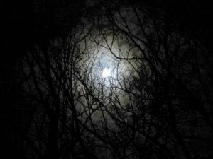 darkness-forest-night-image-31000