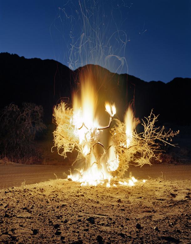 Burning Bush